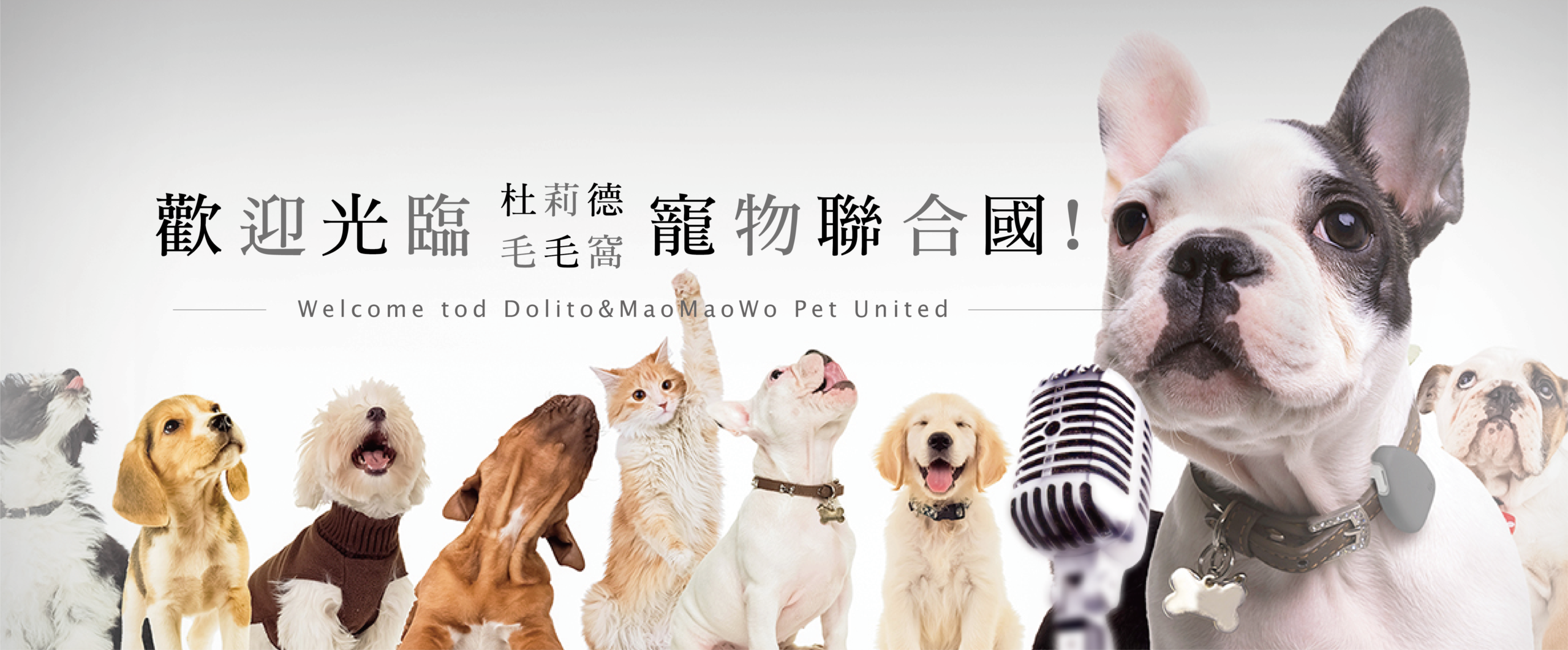 header_dolito_pet_unitednations_001